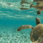 Faccia a faccia con la tartaruga gigante. L'incontro del campione di apnea