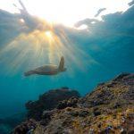 Continua la migrazione di oltre 64mila tartarughe