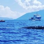Il Capodoglio Furia scompare nel mare