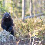 L'orso incontra le ragazze ... e il video fa il giro del web