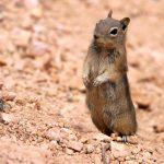 Lo scoiattolo assetato incontra il turista amorevole