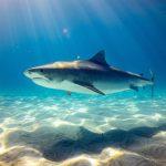 Salento: squalo abbocca all'amo dei pescatori. Il video di cattura e liberazione