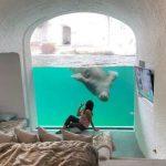 In Belgio c'è un resort all'interno di uno zoo... tra tigri e lupi!
