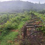 Maltempo: nelle campagne è calamità