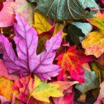 22 settembre: equinozio d'autunno