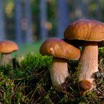Maltempo: prima pioggia d'autunno inaugura stagione funghi