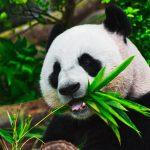 Wwf: dal 1970 persi oltre due terzi della fauna selvatica. Declino catastrofico