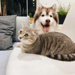 Chi ha un gatto è affascinante, con un cane più responsabile