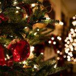 Natale: Confagricoltura, scegliere alberi veri, stelle e ciclamini