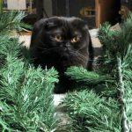 Malika Ayane dice addio al gatto Sconquasso