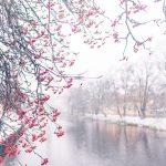 Florovivaismo: ripresa natalizia ma l'effetto Covid continua