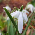 2 febbraio: la Candelora ... è la fine dell'inverno?