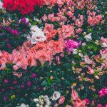 Sanremo: massima sicurezza anche per i fiori