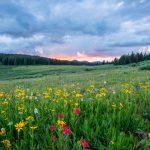 Caldo: piante in fiore fuori stagione