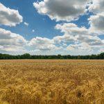 23 marzo: USA istituisce Giornata Nazionale dell'agricoltura