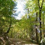 Turismo: il Covid non ferma i pellegrini sui cammini francescani