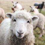 Pasqua: 4 tavole su 10 prediligono l'agnello