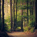 Ambiente: giornate delle Oasi WWF quest'anno si fanno in due!