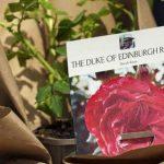 La Regina Elisabetta 'ritrova' il suo Filippo in una rosa