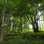 Clima: 50 mln di alberi in Italia per piano UE