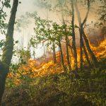 Incendi: Sud in fiamme con estate senza pioggia