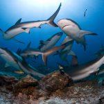 Giornata Mondiale degli squali: WWF, Italia è il primo importatore