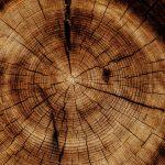 Salone del Mobile: 80% legno importato dall'estero
