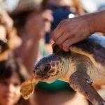 WWF: la lunga estate delle tartarughe