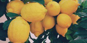 Limoni come l'oro! Il prezzo raddoppia