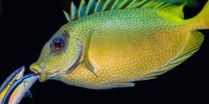 No ai pesci d'aprile sul coronavirus. Appello ministero Salute tedesco